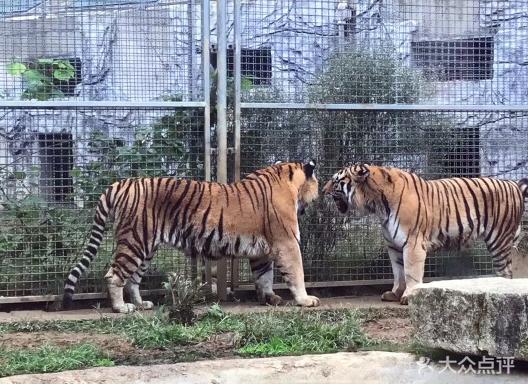 黔灵山公园动物园